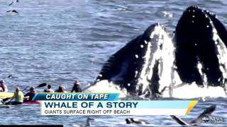 Whales Surprise Surfer Near Santa Cruz, California Beach (VIDEO)