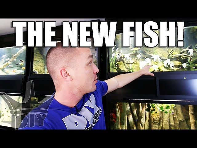 ALL MY NEW FISH!!