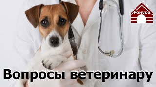 Ответы ветеринара! Дети Фауны, Болезни собак / Veterinarian comments