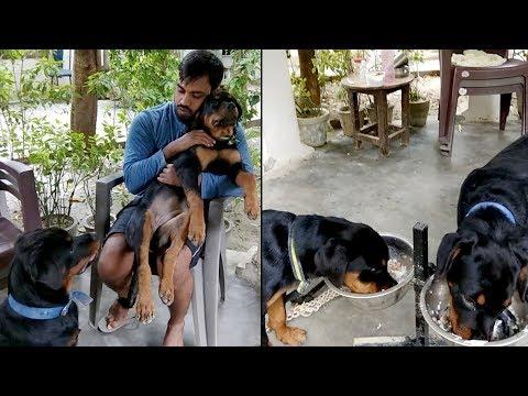 Friendly Rottweiler 🐕 : Diana & Hela : ( Play, Eat, Sleep 😂Repeat )