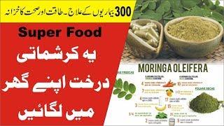Health Benefits Of Moringa | Sohanjna | सहजन के फ़ायदे | Horse raddish tree