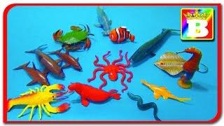 Sa învățăm animalele domestice și sălbatice ANIMALE MARINE ȘI SUNETELE LOR Ep 3 Bogdan`s Show