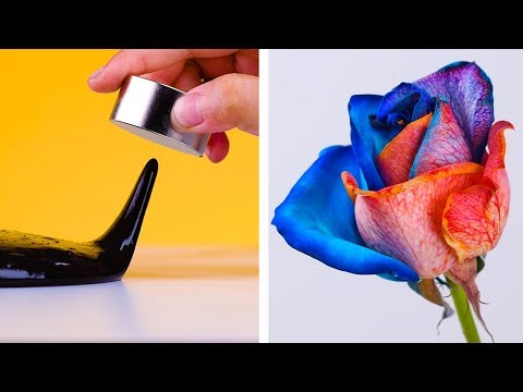 7 Easy Experiments That Will Have Your Mind Boggled & Other Easy DIY Crafts by Blossom