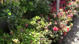 Садовый центр(Магазин-теплица, где можно купить себе понравившиеся растения., 2012-05-28T07:40:40.000Z)