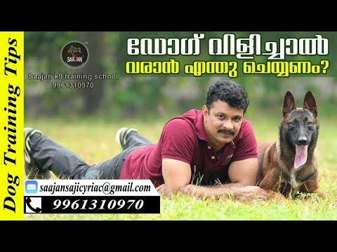 How to Teach Your Dog Come When Calling! Saajan K9 Dog Training School