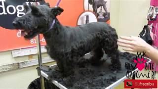 Scottish Terrier Grooming