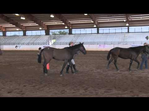 2015 Arizona Extreme Mustang Makeover  - Prelims
