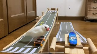 A Skateboarding Bird.