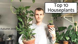 Top 10 Houseplants | Autumn 2018