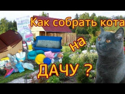 Как собрать кота на дачу? | Совместное видео с Vika K