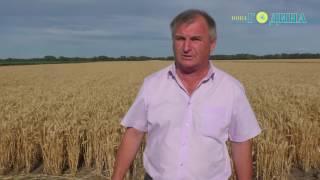 Година ТВ - Хлібна нива - 2017