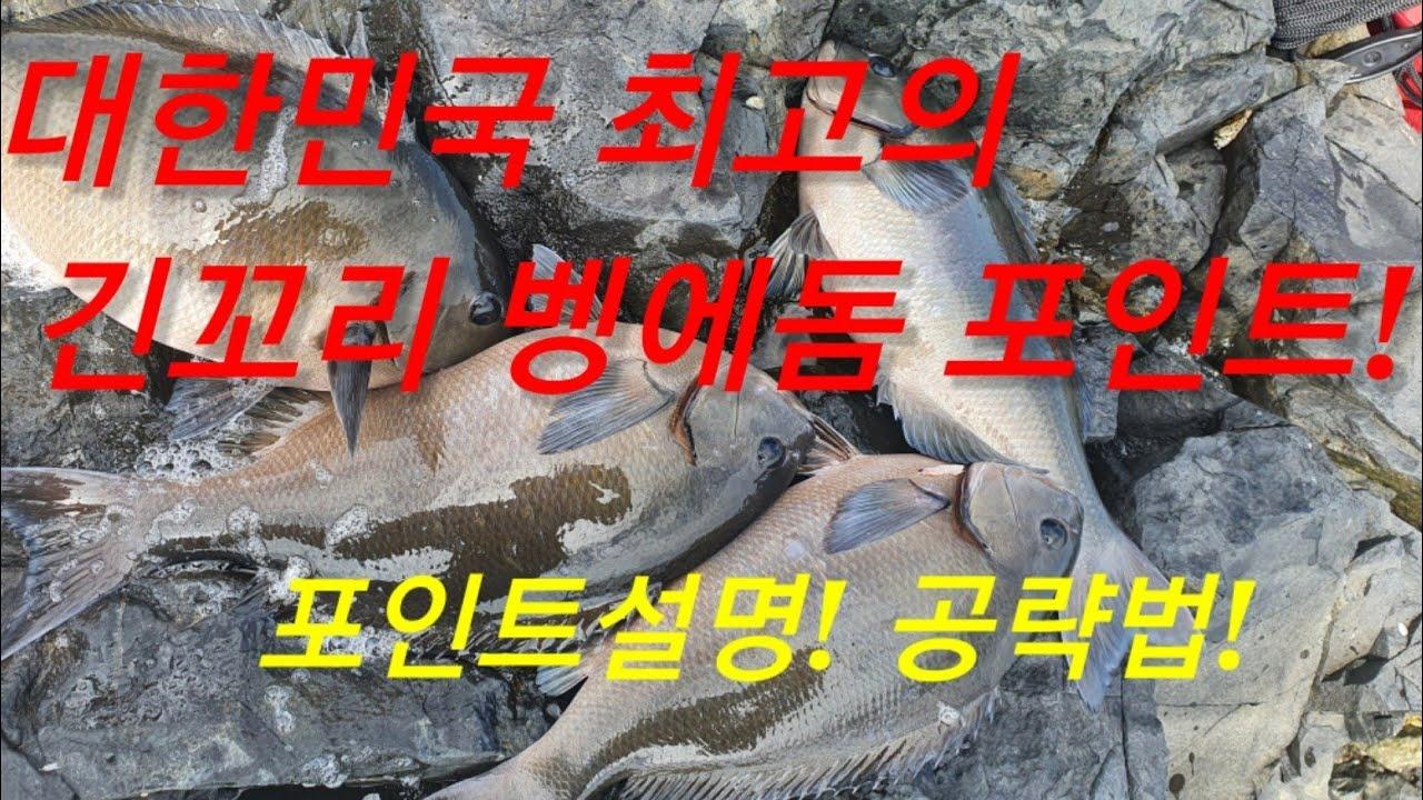 대한민국 최고의 긴꼬리벵에돔 포인트를 아십니까? 그곳은?