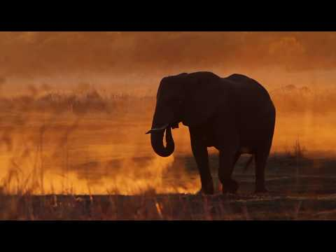 Imvelo launches horse safaris in Hwange National Park!