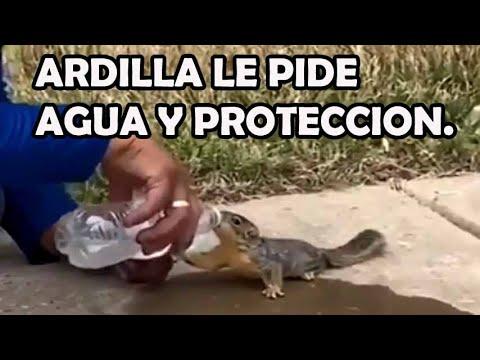 Ardilla le pide Agua y protecciòn