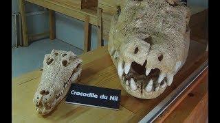 Слабо зайти в пасть крокодила?