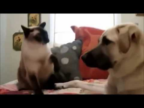Angry Cats VS Dogs Funny Compilation!!!