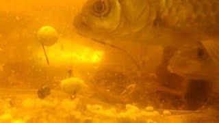 Рыбы выберут ХЛЕБ vs ПЕНОПЛАСТ?Реакция карася и плотвы. Рыбалка.Подводная съемка