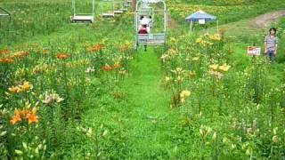 また山麓に広がる15000坪に及ぶゆりの園は従業員の方が丹精込めたゆり畑...