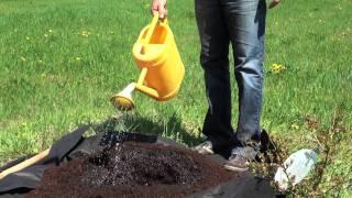 Kako posadimo borovnice
