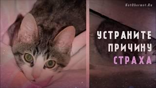 Как отучить котенка кусаться и царапаться - 10 советов людям