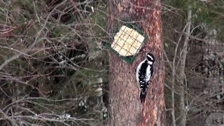 Northern Ontario Winter Bird Feeder