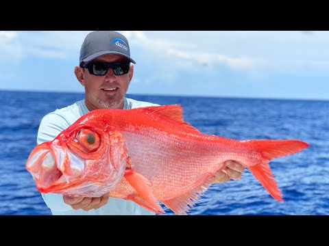 RARE DEEP WATER FISH ( ALFONSINO ) Catch Clean And Cook