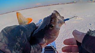 Весь балансир в шахте Зимняя рыбалка 2020 2021 на окуня Ловля окуня на балансир