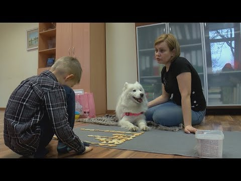 Suns – terapeita asistents