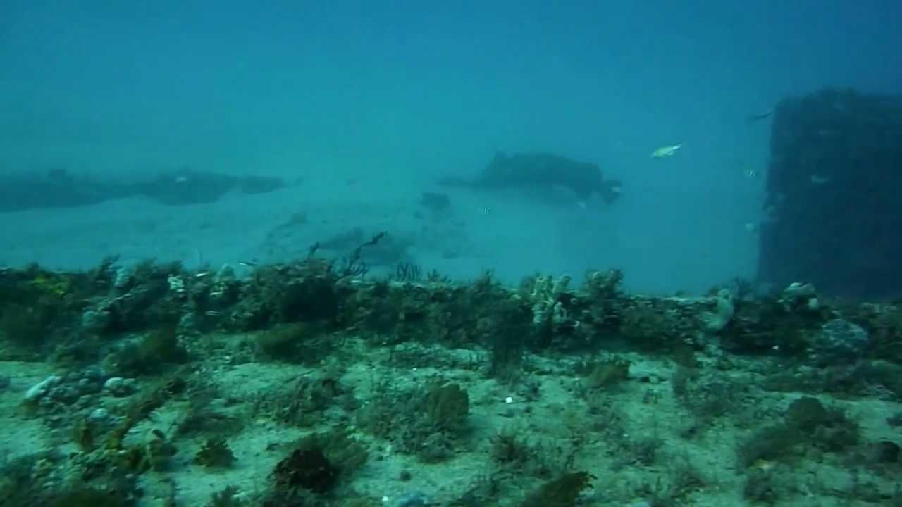 Scuba diving in west palm beach florida march 2013 youtube scuba diving in west palm beach florida march 2013 xflitez Images
