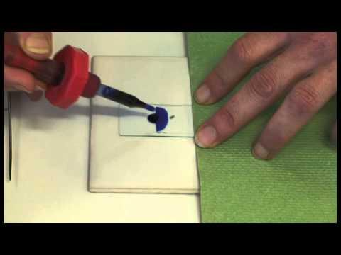 preparing-a-microscope-slide