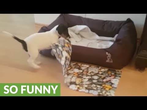Determined puppy uses floor mat as blanket