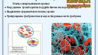 Презентация Кровь и ее функции