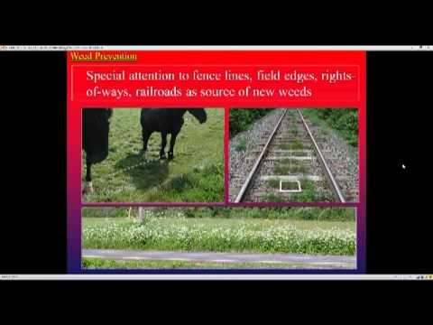 Organic Weed Management on Livestock Pastures Webinar