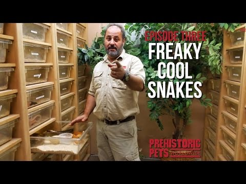 Freaky Cool Snakes : Episode Three