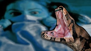 Craziest Facts About Snakes