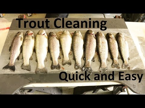 How to clean a Trout (Quick and Easy)