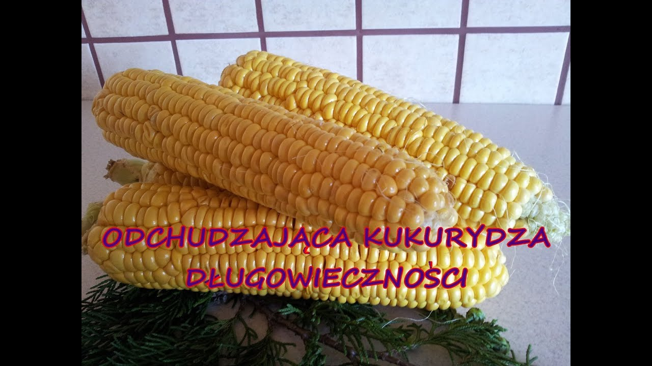 Odchudzajaca Kukurydza Dlugowiecznosci Dieta Cud Okinawa