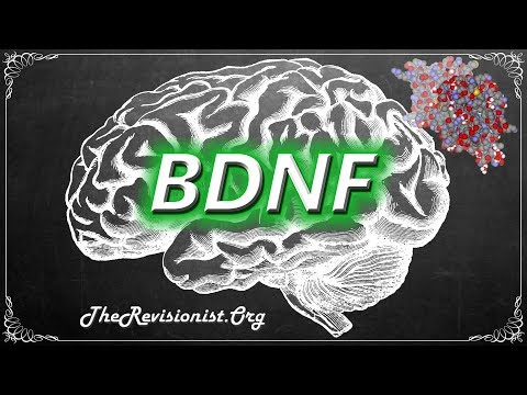 Understanding BDNF and Its Importance to Brain Health