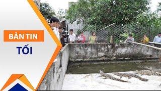Sau lợn, cá sấu cũng cần được cứu   VTC1