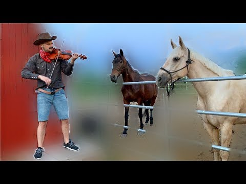 playing-old-town-road-for-the-horses-in-the-back