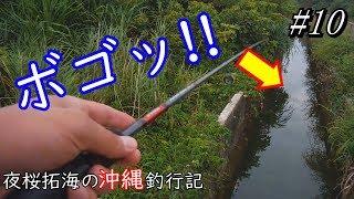 日本の秘境でルアーフィッシング【亜熱帯原生林】