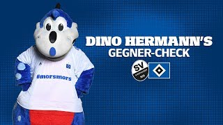 Dino Hermann's Gegner-Check   SV Sandhausen   #SVSHSV