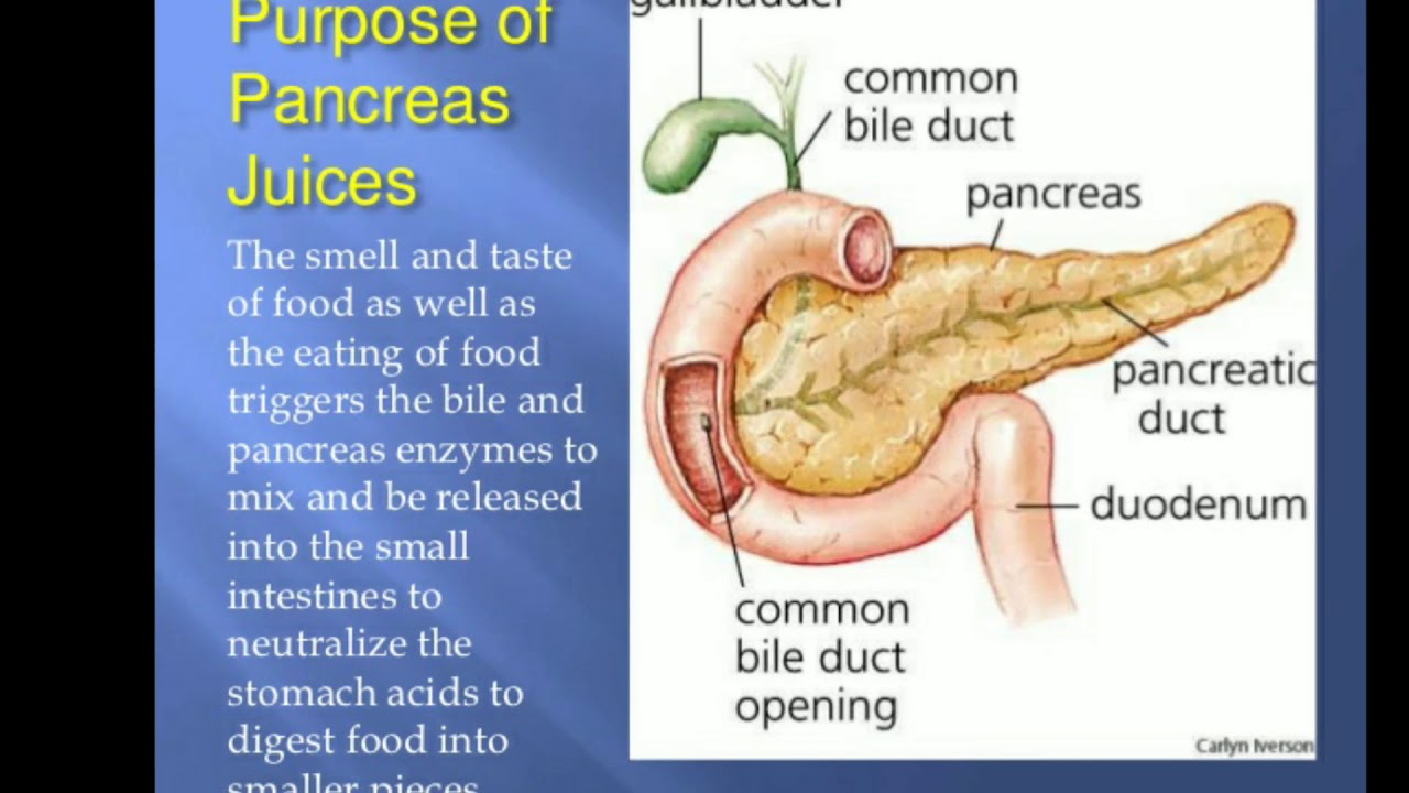Pancreaspancreas In Hindi Barma Study App Youtube