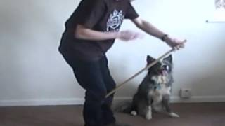 How To Train Your Dog To Jump Through Your Arms