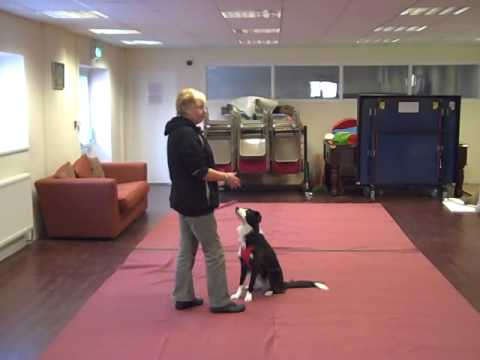 Dog Dancing for Beginners (Dorset) (01929 423410)