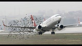 10 Weirdest Bird Attacks Caught on Camera!