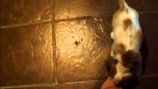 Cute Puppy Attacks Kitten