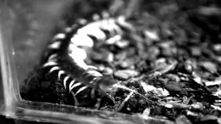 Человеческая многоножка 2 (2011) Фильм. Трейлер HD