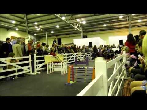 Burgess Premier Small Animal Show 2015  - Bunny Jumping - Part 1