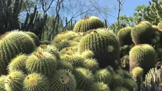 Ботанический сад в Лос Анджелесе